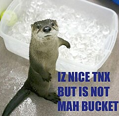 Click image for larger version.  Name:otter-no-bucket.jpg Views:10 Size:35.4 KB ID:92652
