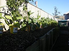 Click image for larger version.  Name:Plants.jpg Views:138 Size:132.6 KB ID:277192